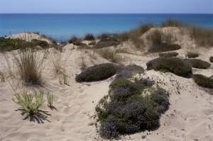 dune-campomarino-villa-bruno